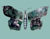 435. Butterfly